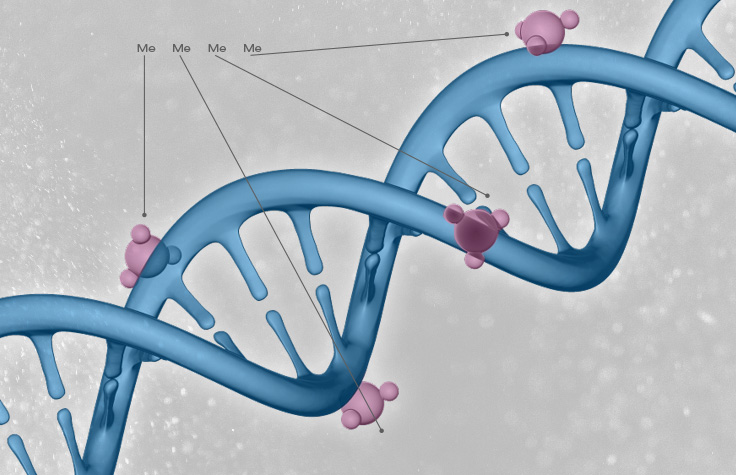 cancer epigenetics illustration