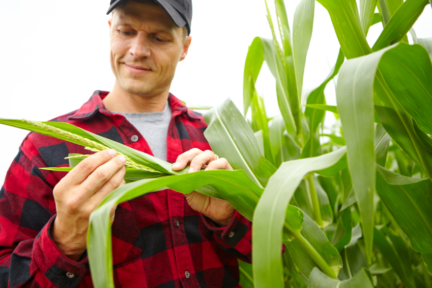 Syngenta Develops Corn That Can Thrive Under Water Stress
