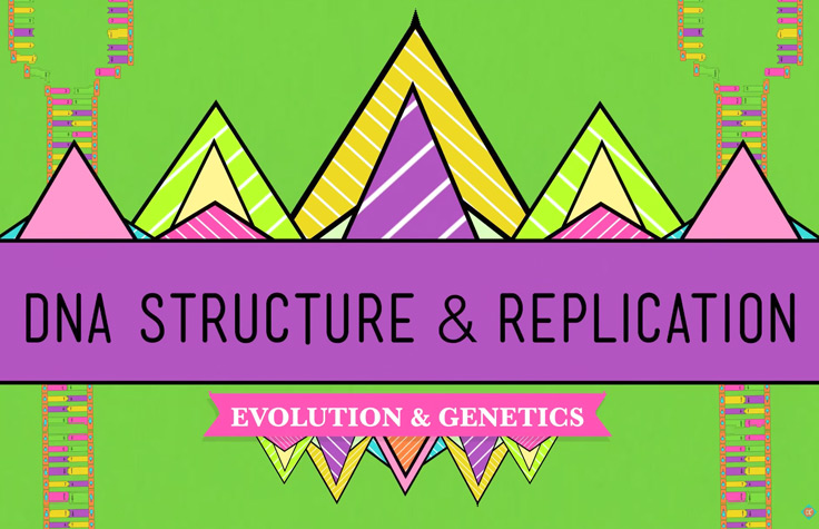 Crash Course: DNA Structure and Replication