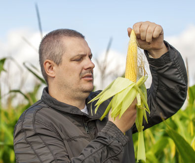 New Maize BeadChip Will Facilitate Seed Development