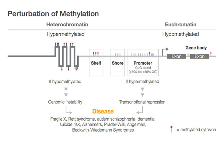 Tips from Methylation Array Experts