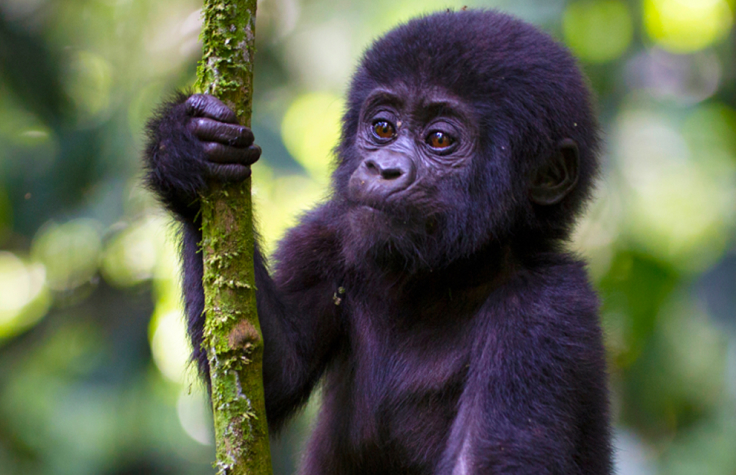 Genetic History and Adaptation of Russian Cattle Breeds