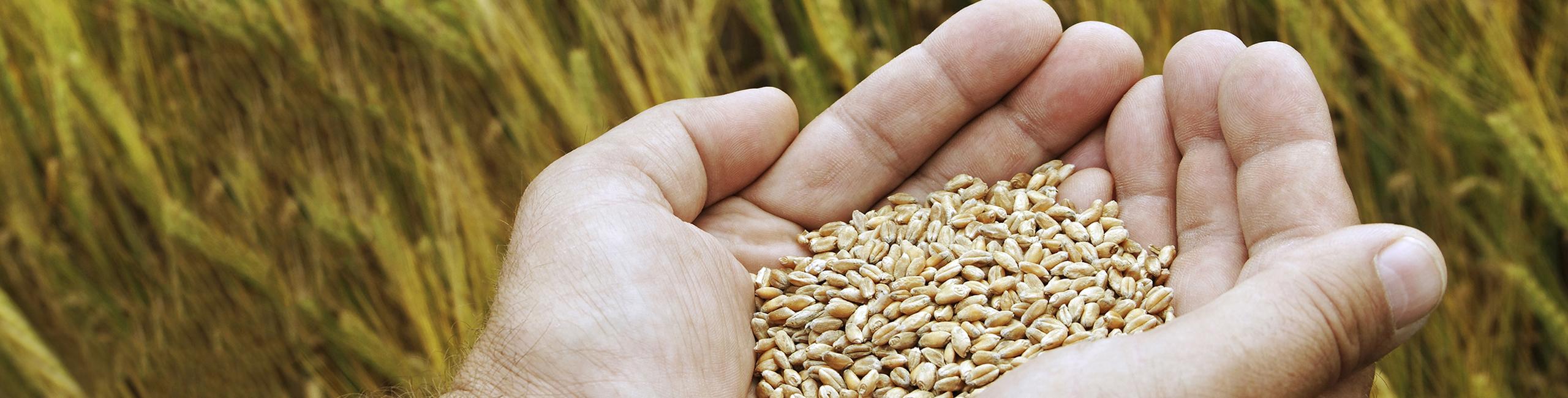 Illumina Announces the Thirteenth Agricultural Greater Good Grant Winner